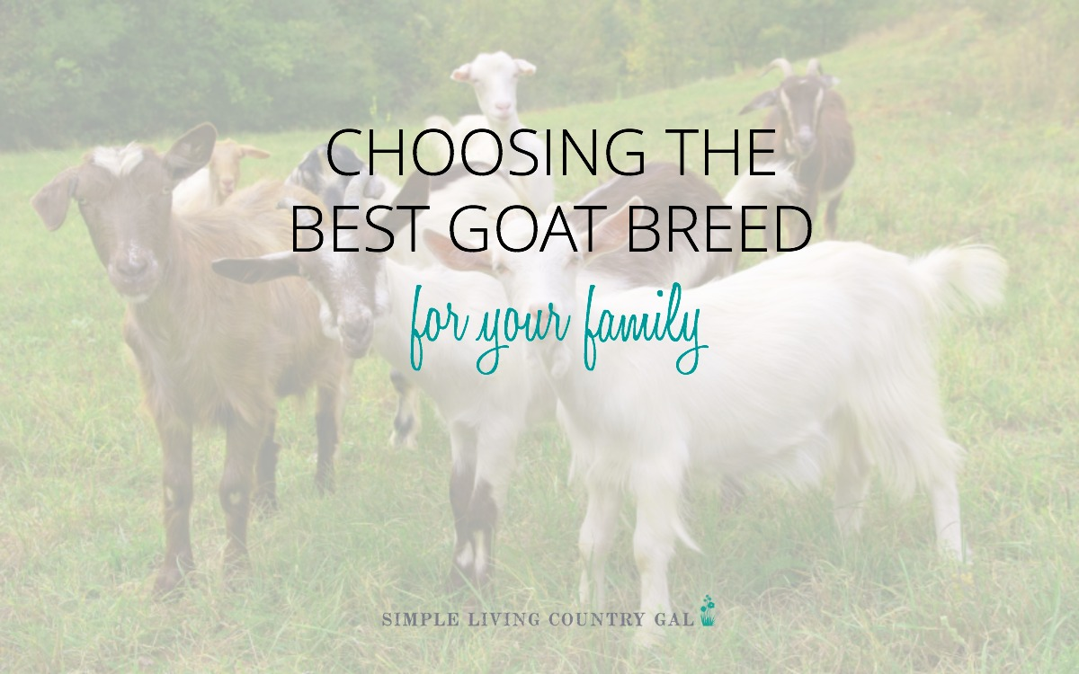 Goat Breeds List - Picking The Best Goat For Your Family