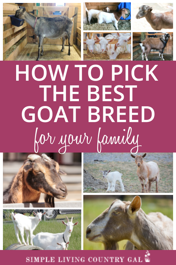 how to pick the best goat breeds for your family and homestead