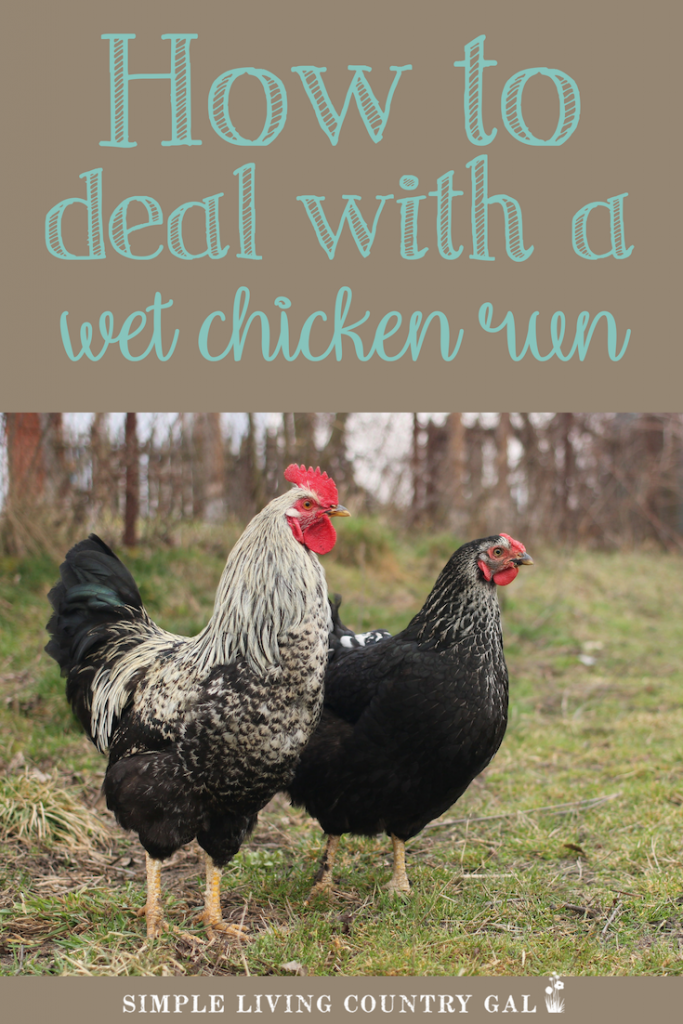 There is nothing quite as frustrating than a wet and muddy chicken run. Not only does it give you muddy eggs, but the dirt can cause health issues for your hens and rooster. These simple tips will help you to give your flock a try place to stand when the coop is muddy and wet. #backyardchickens #chickens #raisingchickens #homestead #urbanfarming