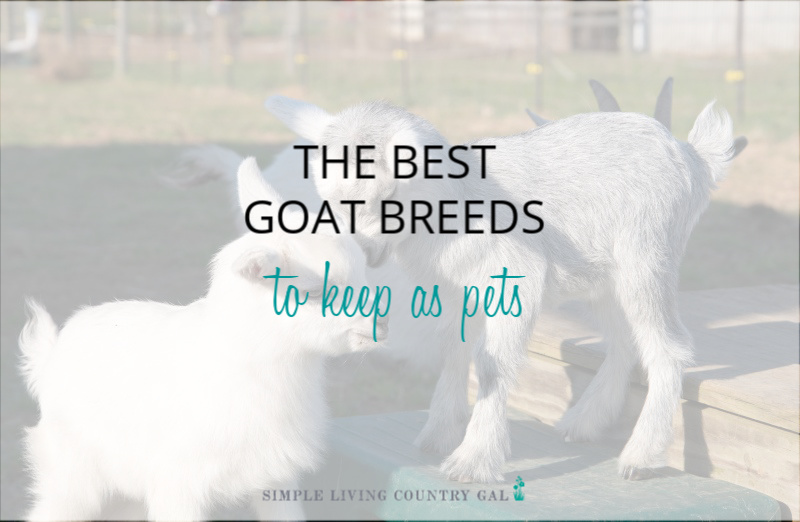 Goat Breeds for Pets