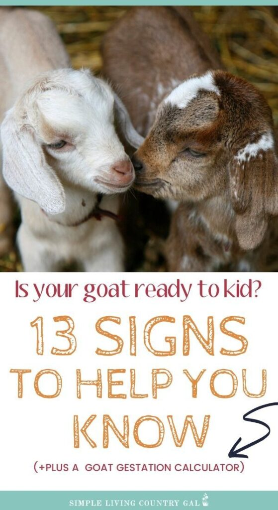 Goat kidding checklist