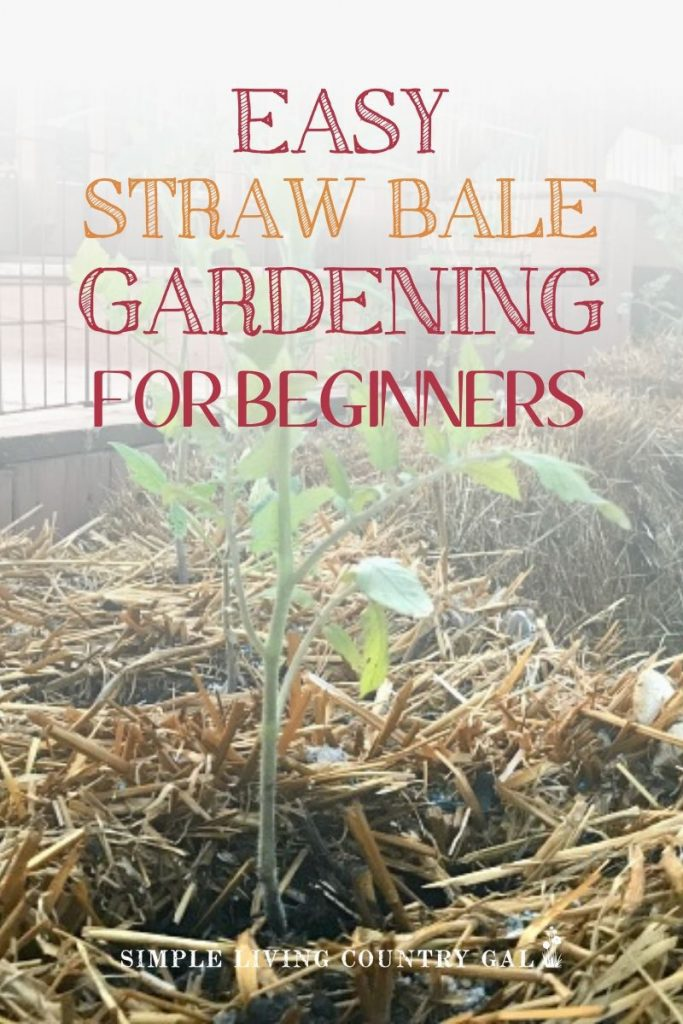 Gardening 101 using bales of straw. Straw bale gardening ultimate guide. Step by step straw bale gardening. How to grow your vegetables using a straw bale. Backyard gardening tips for straw bale gardening. Container gardening tips for straw bales. Vegetable garden tips for beginners. #strawbalegardening #garden #slcg