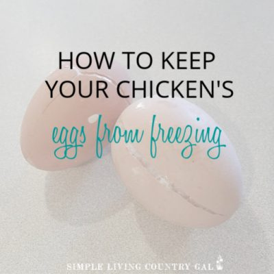Live in a cold area? Worried your chicken eggs are going to freeze solid? Here are a few tips you can use to help make sure they don't. But what if they do? Don't toss those eggs just yet! Find out what you can do with frozen (even cracked) chicken eggs. #chickens #backyardchickens #slcg #homestead