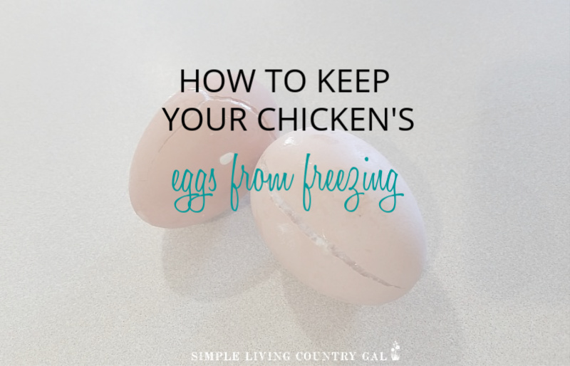 How To Keep Eggs From Freezing In The Winter