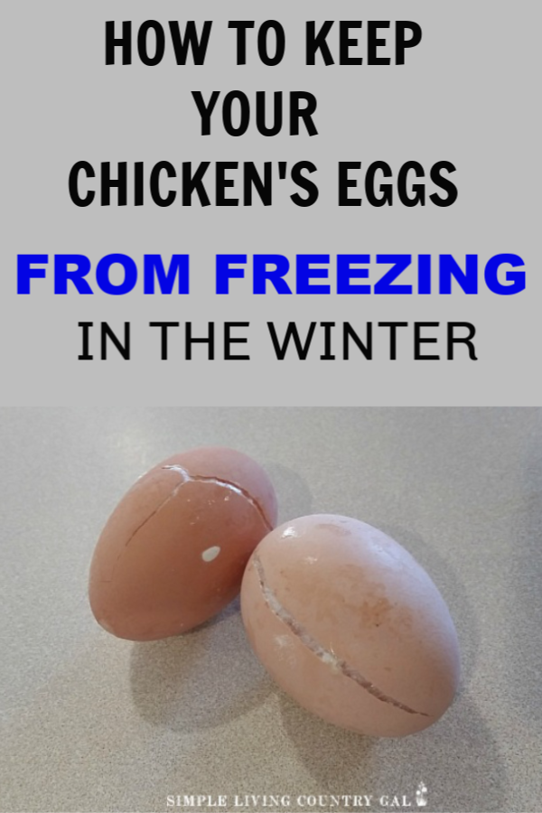 Keep eggs from freezing in winter. Live in a cold area? Worried your chicken eggs are going to freeze solid? Here are a few tips you can use to help make sure they don't. But what if they do? Don't toss those eggs just yet! Find out what you can do with frozen (even cracked) chicken eggs. #chickens #backyardchickens #slcg #homestead