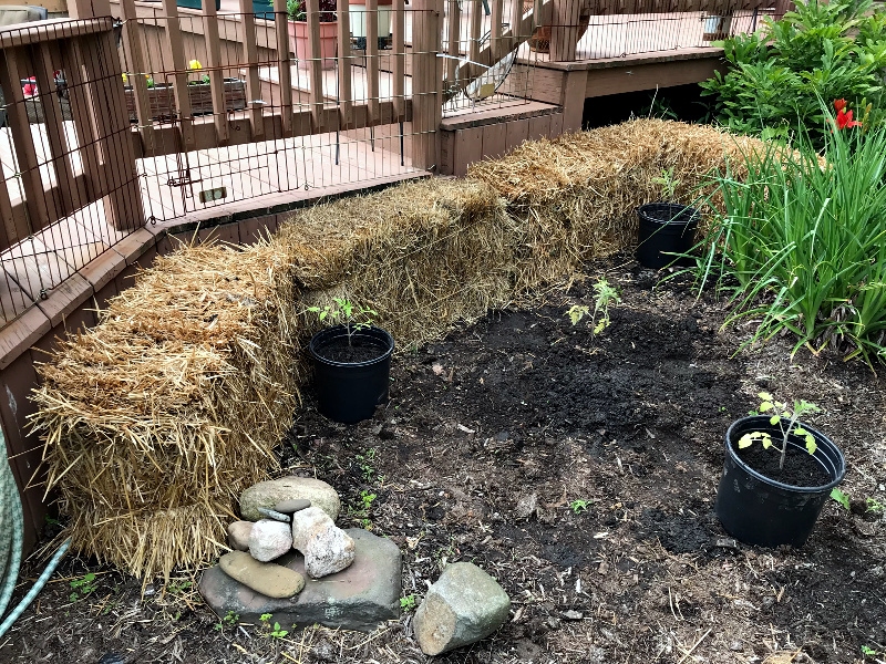 Straw bale gardening for beginners. A step by step guide.