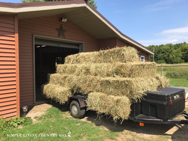 Have you heard of straw bale gardening but have not tried it out yet? This guide will walk you through what it is, how to set one up, what to plant and harvesting tips. Learn the science behind how it all works so you know what you are doing and why. #strawbalegardening #garden #slcg