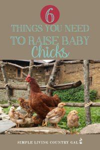 baby chicken supply list