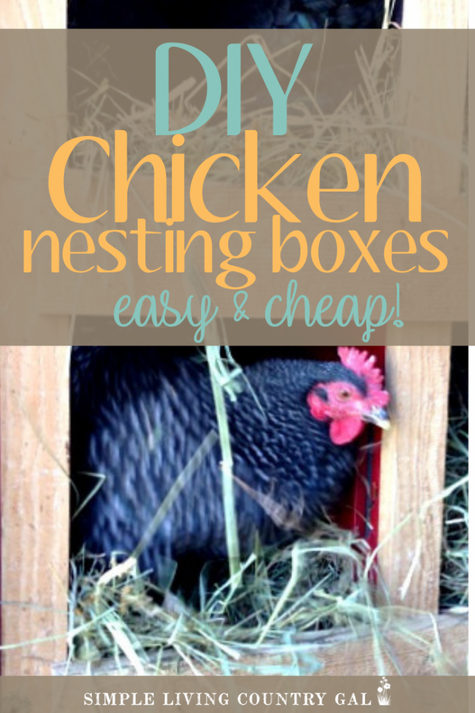 Here is super simple and inexpensive nesting chicken box set up for your chickens then this DIY milk crate nesting box system might be for you. See how we made ours using materials from around our farm for next to nothing! DIY nesting boxes for homesteaders that anyone can make for little or no money. #chickens #backyardchickens #chickencoop #slcg