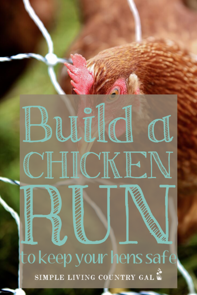 DIY chicken run to protect your chickens How to build a sturdy chicken run