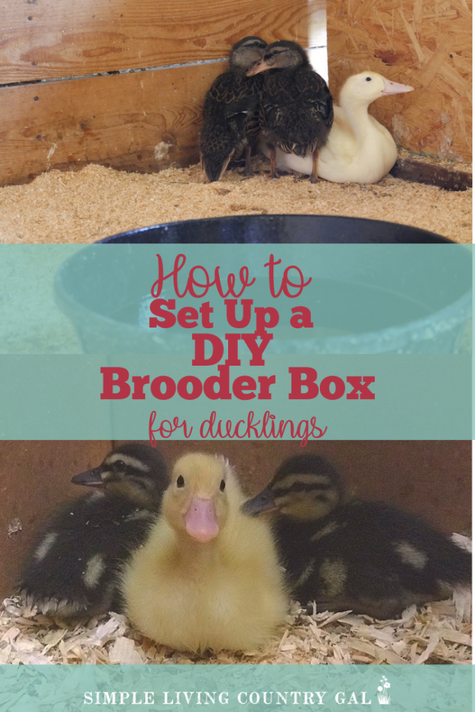 Before you bring your adorable baby ducklings home be sure to have a brooder all set and ready for them. A simple DIY brooder you can make with supplies that are extremely inexpensive or even on hand! #ducklings #duckbrooder #ducks #slcg