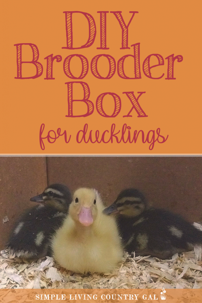 New to ducklings and not sure what you need? Start with a home, also called a brooder. A simple DIY brooder you can make with supplies that are extremely inexpensive or even on hand! #ducklings #duckbrooder #ducks #slcg
