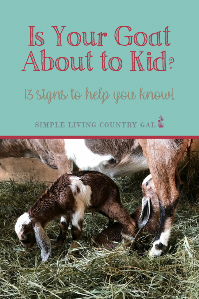 If you are nervous about kidding, don't be. Print out this free checklist so you are ready and not quite so overwhelmed. A simple list that will walk you through what to expect so you are better prepared when the time comes. #goatkidding #goatkiddingsigns #dairygoats