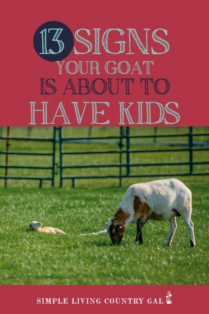 Whether it's your first time kidding or your 10th, knowing the signs can be so helpful. Get your free checklist so you are ready and not quite so overwhelmed. A simple list that will walk you through what to expect so you are better prepared when the time comes. #goatkidding #goatkiddingsigns #dairygoats