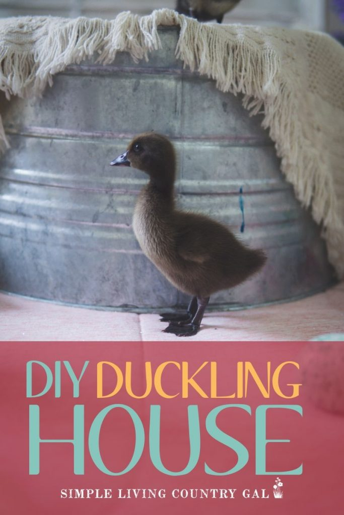 How to create a super simple and cheap DIY duckling house. Here is your to-do list. Start with a home, also called a brooder. A simple DIY brooder you can make with supplies that are extremely inexpensive or even on hand! #ducklings #duckbrooder #ducks #babychicks