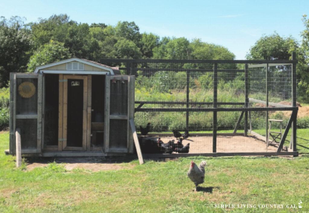 a chicken coop with a diy chicken run