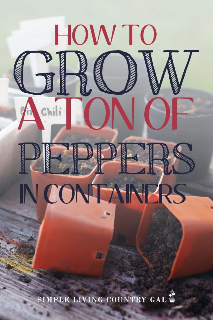 how to grow peppers in containers. How to grow peppers on a porch or patio garden. How to grow a ton of peppers. step by step guide on how to grow peppers in containers so you can have a garden. Tips on how to start your very own patio garden. #patiogarden #peppersincontainers #containergardening