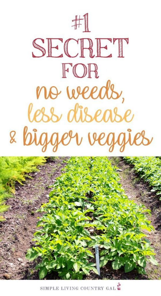 stop weeds by mulching
