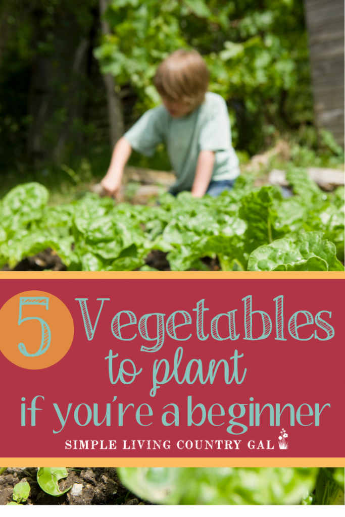 Are you a first time gardener and a bit lost as to what are the easiest vegetables to grow? This list is all you need to get started. The easiest veggies to grow, how to plant them, what to watch for and when to harvest. Everything you need is right here! #garden #beginnergardener #backyardgarden #gardeningtips
