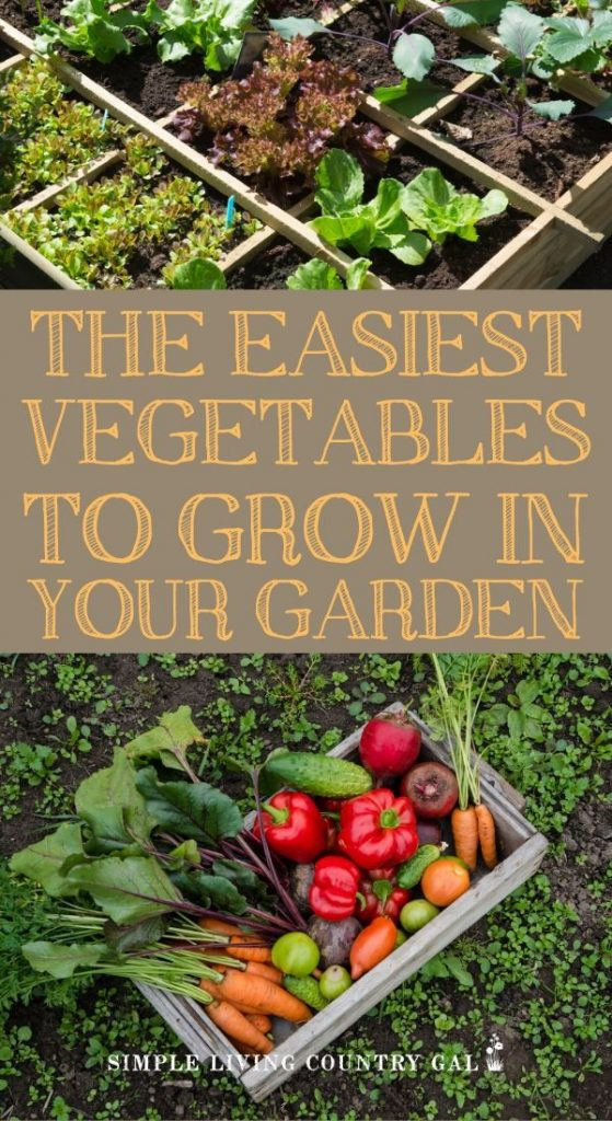 The easiest veggies to grow for the new gardener. First time gardener vegetables and backyard gardener checklist. A step by step new gardener growing guide.The easiest veggies to grow, how to plant them, what to watch for and when to harvest. Everything you need is right here! #garden #beginnergardener #backyardgarden #gardeningtips