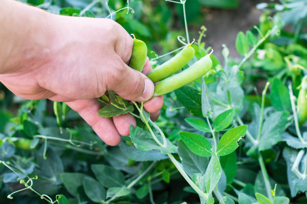 the best vegetables to grow in your first garden
