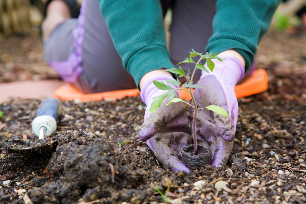 Planting a garden. A list of first time gardener vegetables.