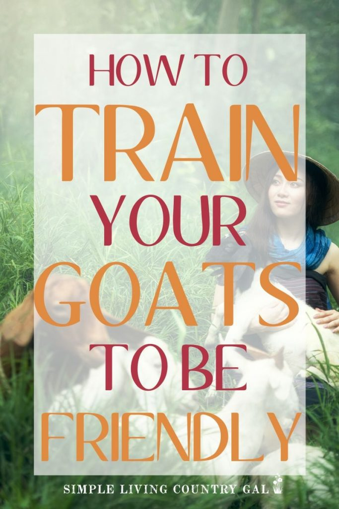 Do you have goats that are a bit rowdy? These tips will help you to have more people friendly goats! Learn what you can do from day one to ensure your goats are people friendly. Simple tips that will work on new kids and older goats as well. #backyardgoats #goats #goattraining
