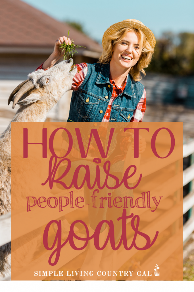 Do your goats run from you instead of to you? These tips will help you to have more people friendly goats! Learn what you can do from day one to ensure your goats are people friendly. Simple tips that will work on new kids and older goats as well. #backyardgoats #goats #goattraining