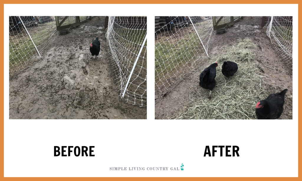 before and after of a wet chicken run