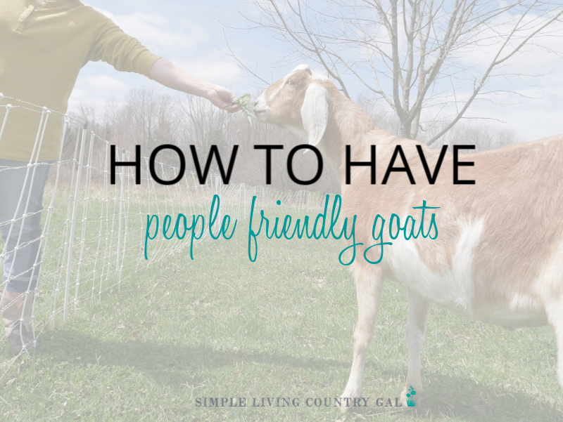 How to Have People Friendly Goats