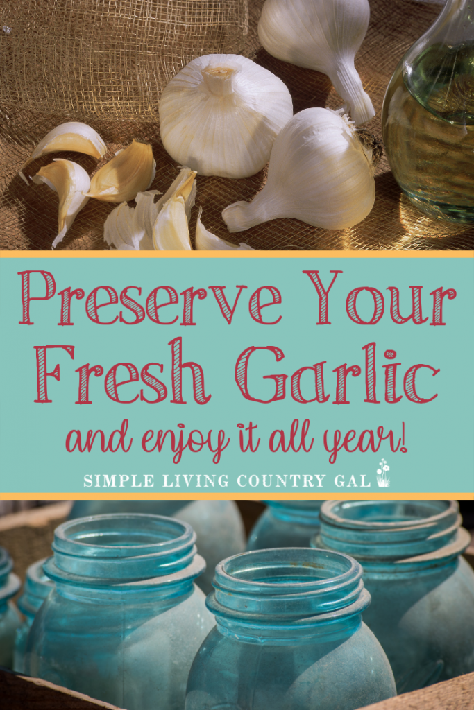 Even if you have never canned before this vinegar method requires no supplies is a super simple and great way to enjoy your garlic year-round with these easy tips. #garlic #preservegarlic #gardening