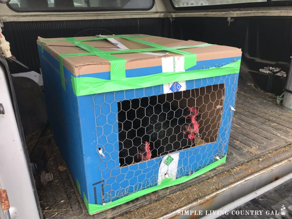 Sick chicken DIY crate