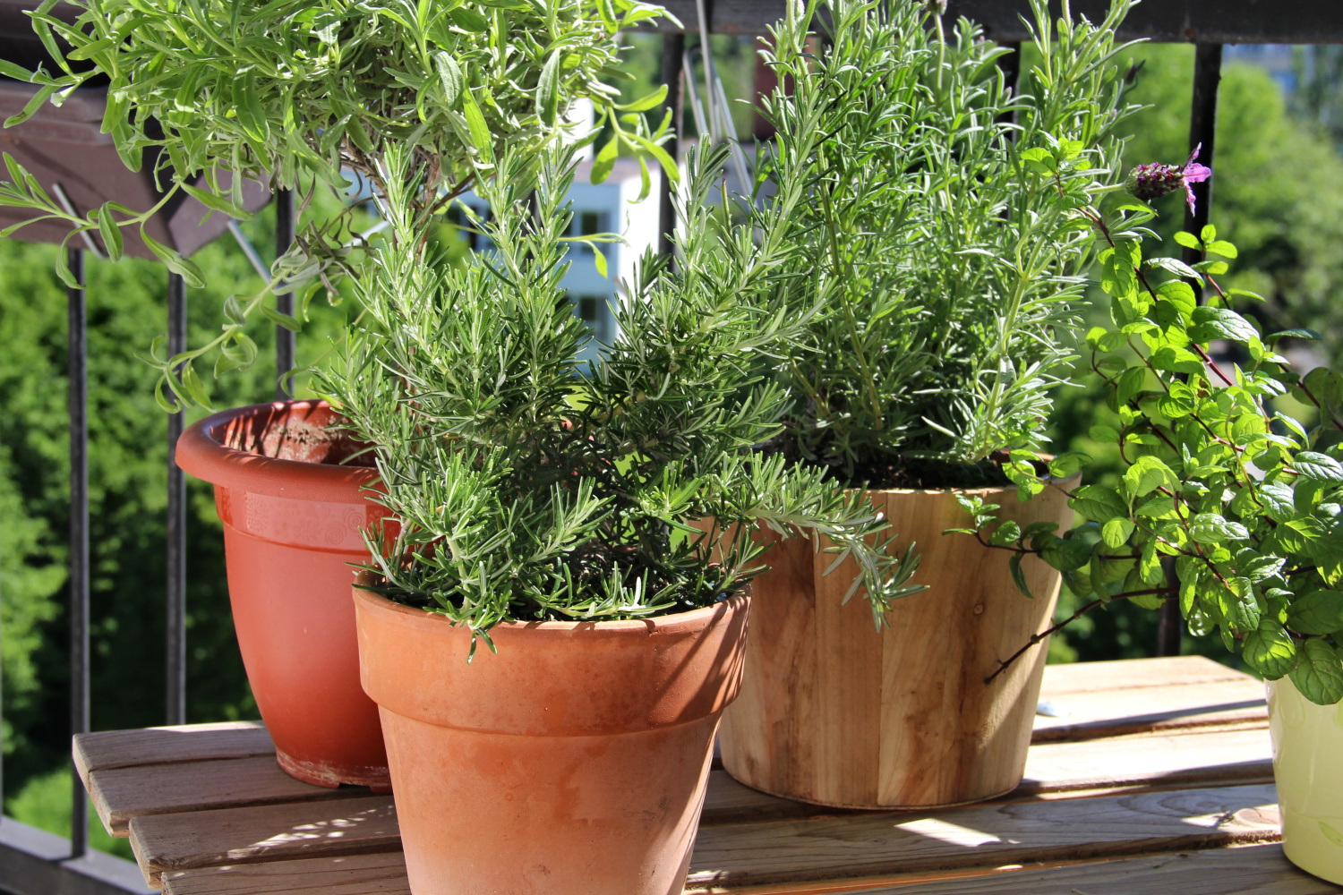 growing herbs in pots. Best pots to use outdoors to grow a container garden