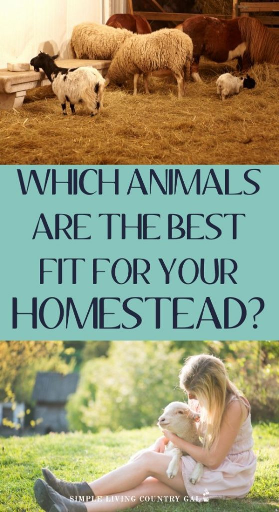 homestead animals