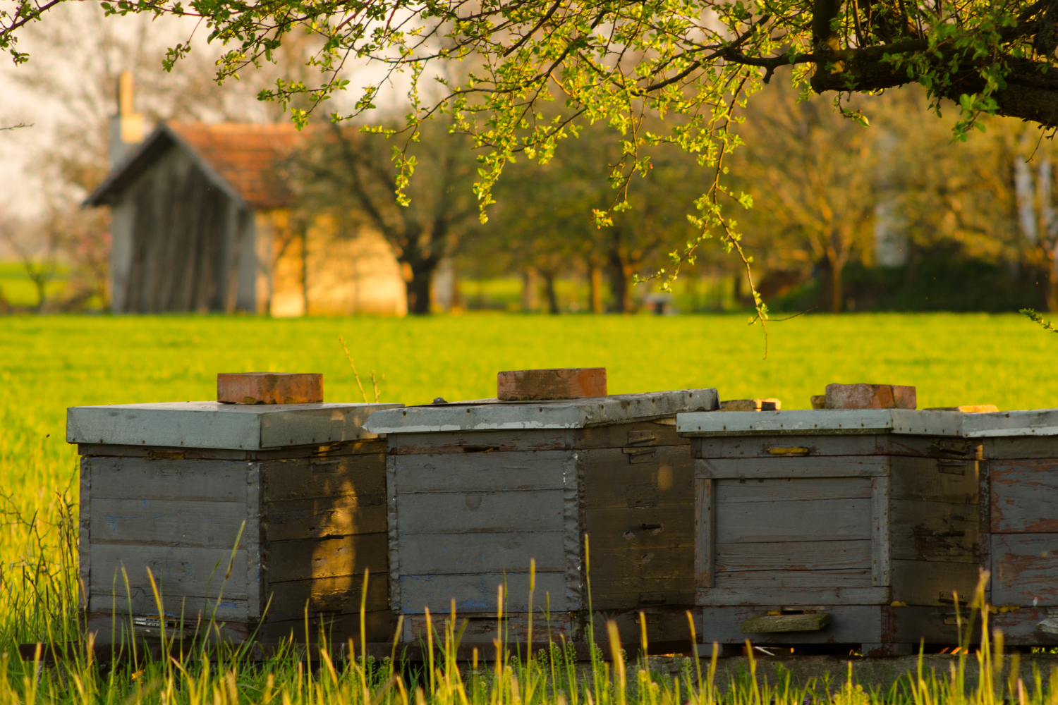 bee hives. Choosing the best homestead animals for your family farm