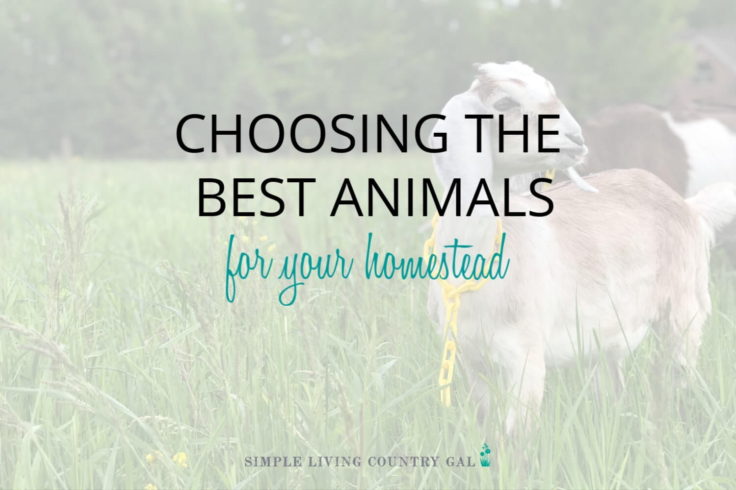 How to Choose the Best Homestead Animals