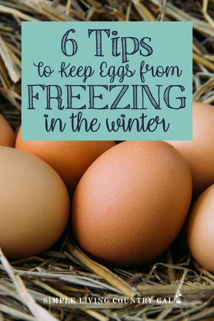Are you worried your chicken eggs are going to freeze solid out in your chicken coop this winter? Here are a few tips you can use to help make sure they don't. Prep your chicken coop for the winter and keep eggs from freezing. Then know what you can do with frozen chicken eggs so you are not wasting them. #chickeneggs. #chickens #backyardchickens #homestead