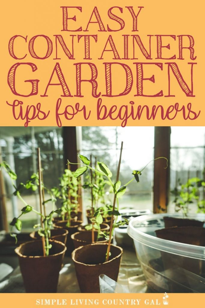 If you want to have a full vegetable garden right outside your door then these easy container gardening tips will help. Not all containers are created equal and not all vegetables follow the same rules when growing them in a container. These tips will allow you to have a full vegetable patio garden no matter where live. Urban gardens for everyone! #containergardening #familygardenplan #urgangardening