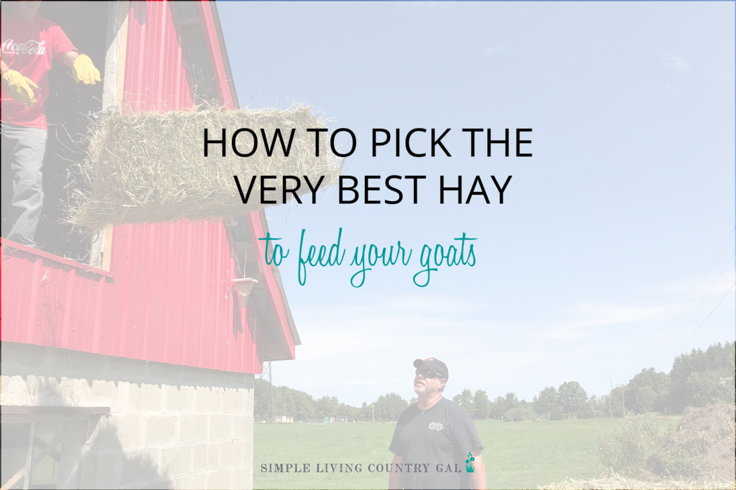 How to Pick the Best Hay to Feed Goats