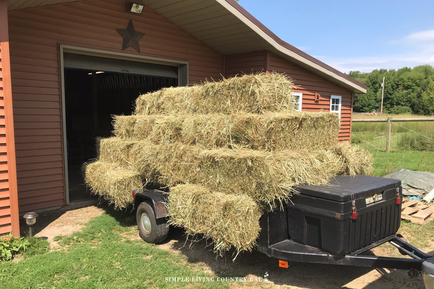 goat hay going into the barn