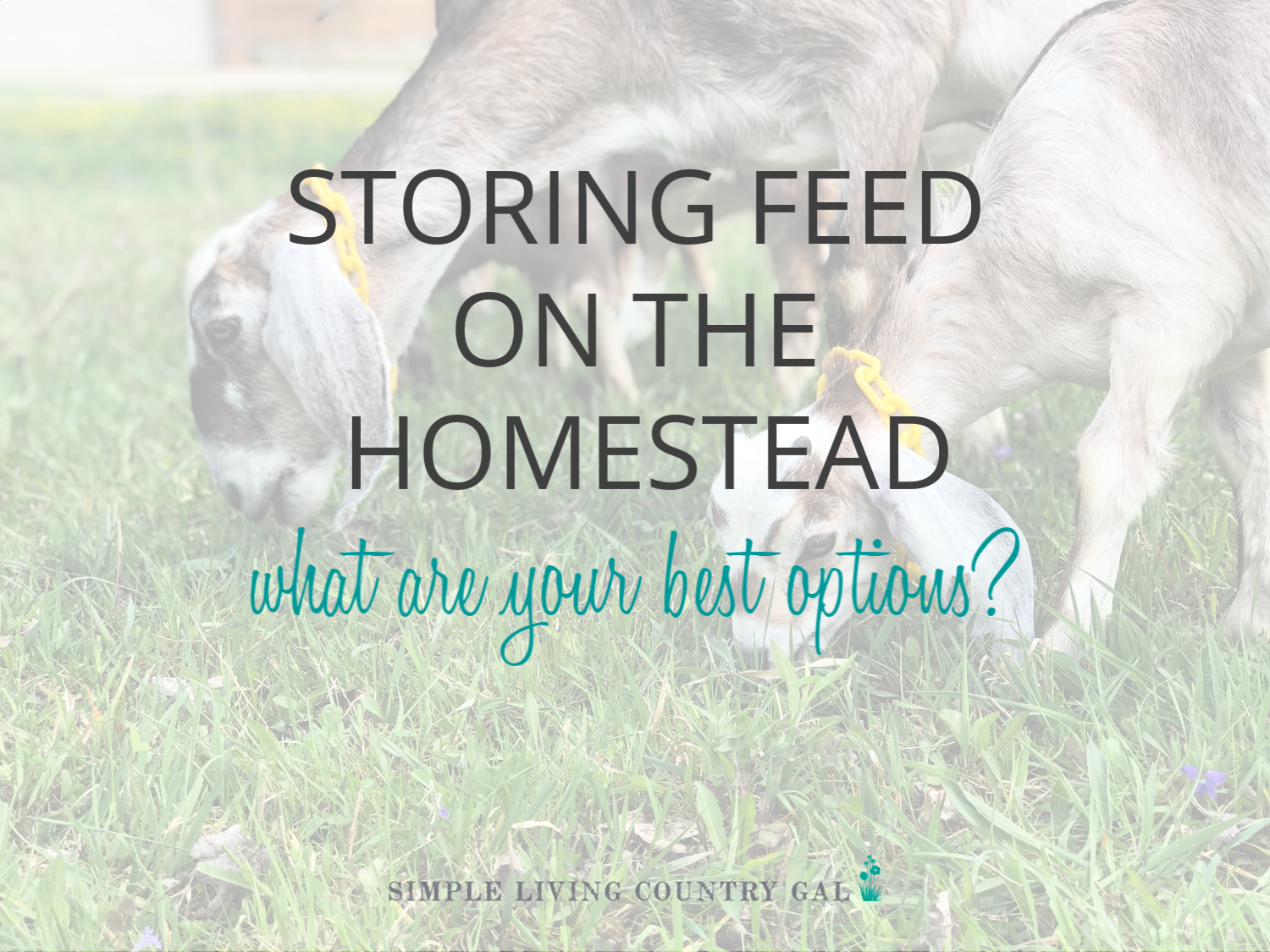The Best Livestock Feed Storage Containers