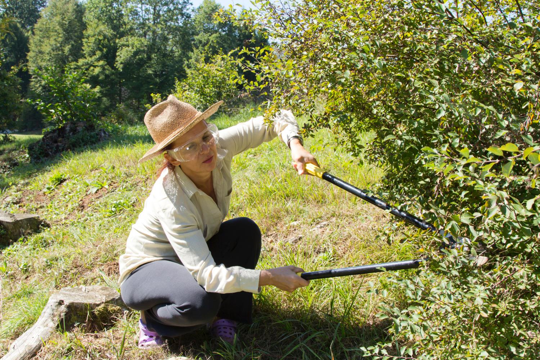 woman using gardening tools. Best gardening tools for your garden