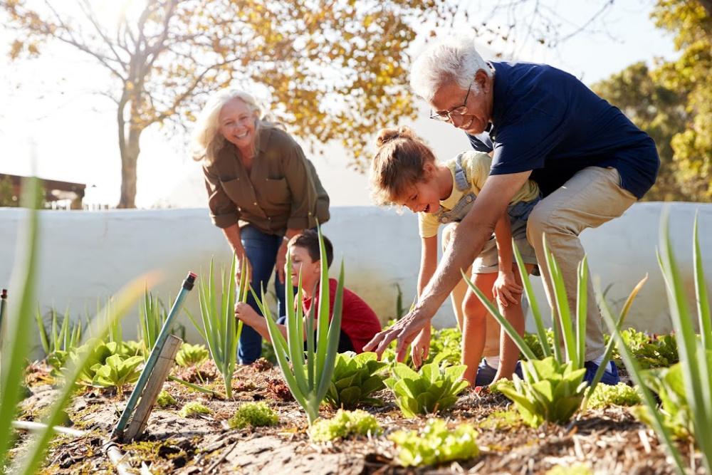 Grandparents gardening with children in a family garden