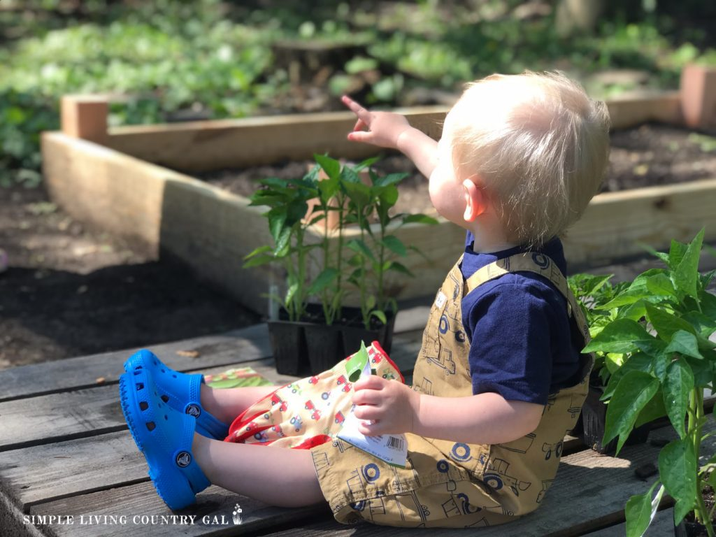 A toddler sits on a raised garden bed in a thriving family garden