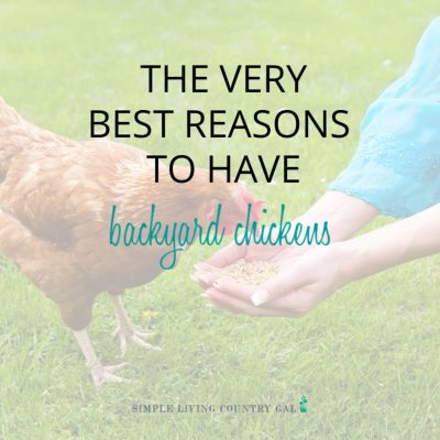 woman feeding a backyard chicken