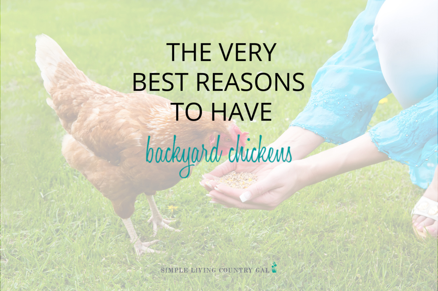 10 Wonderful Benefits of Chickens