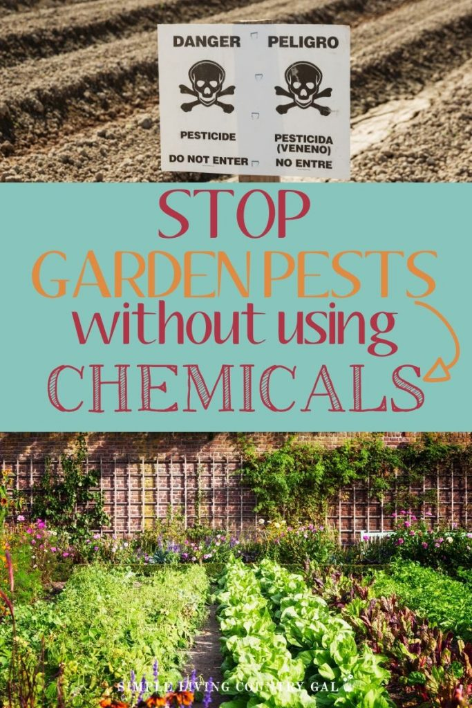 Hot to stop garden pests without chemicals