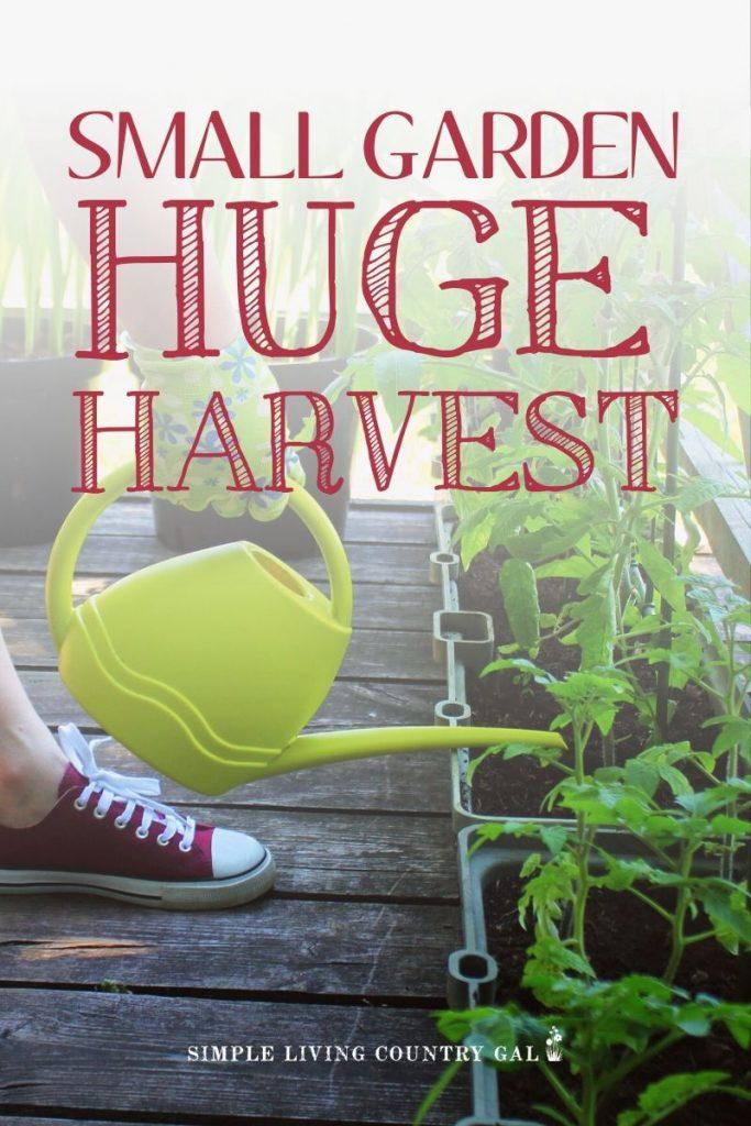 small garden huge harvest