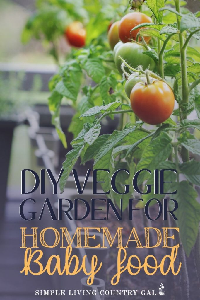 How to grow a vegetable garden for homemade baby food. How to have a vegetable baby food garden. Fresh organic vegetables for homemade baby food. Make your own baby food with a baby food garden that you can grow in your own backyard. How to grow carrots, sweet potatoes, and vegetables for a baby food garden. #babyfood #homemadebabyfood #organicbabyfood
