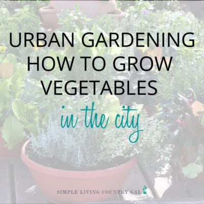 Having a garden in the city is easy. How to grow veggies in the city. How to grow tomatoes on your porch. Container gardening tips for beginners. How to grow your summer garden in pots. The easy way to have a vegetable garden in the city. #citygarden #urbangarden #containergarden #urbangardening